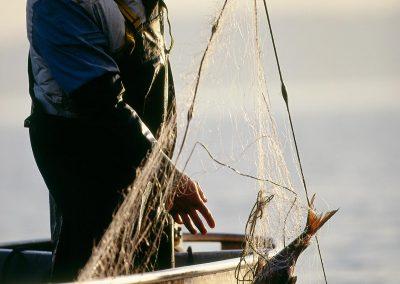 Fischermeister Thomas Lex mit einer Chiemsee-Brachse